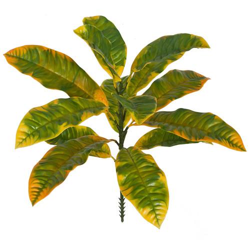 """A-18401020"""" Outdoor Croton PlantGreen/Yellow Mix"""