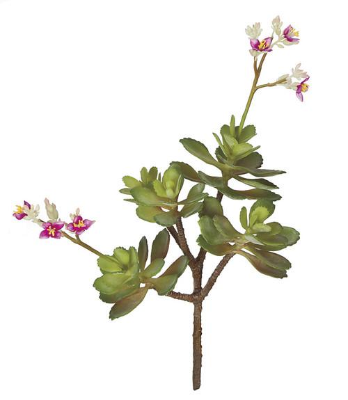 16 Inch Flowering Sedum Plant