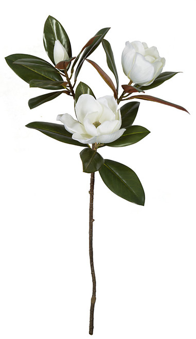 35 Inch Large Flowering Magnolia Stem