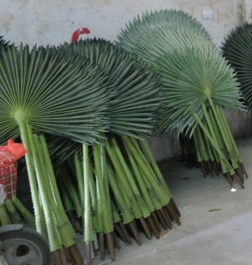"69"" UV Fan Palm Branch"