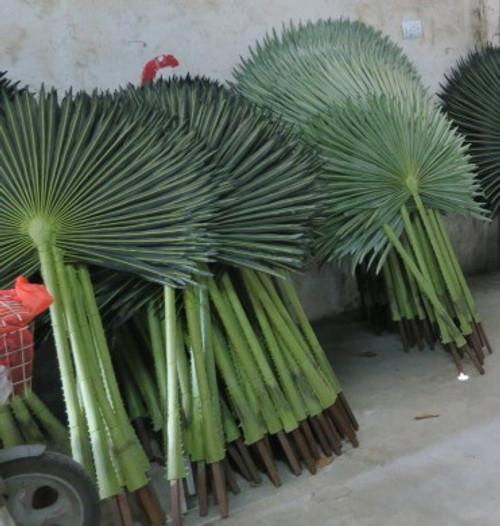 69 Inch UV Fan Palm