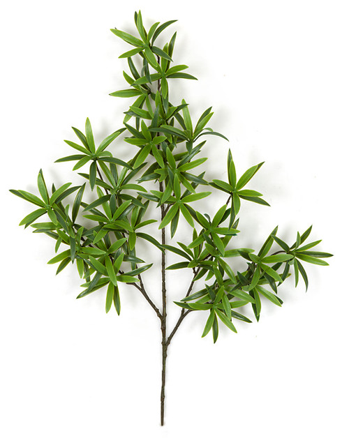 25 Inch Fire Retardant Podocarpus Spray