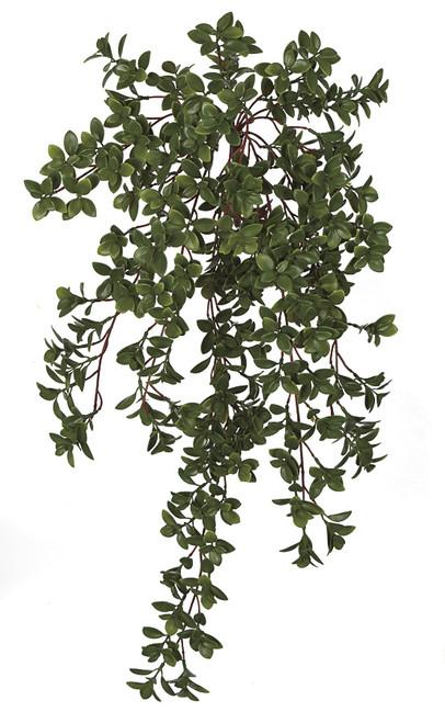 29.5 Inch Hanging UV Nematanthus Bush (Goldfish Plant)