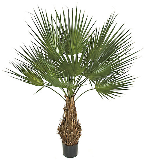 5 Foot PVC Washingtonia Palm Tree on Natural Trunk