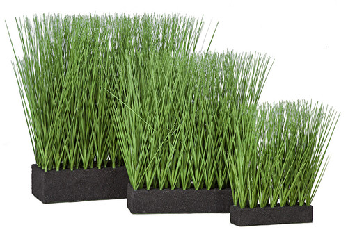 """Grouping of Planted Onion Grasses - Sizes 11"""" Tall,  16"""" Tall, 19"""" Tall with Rectangle Foam Bases"""