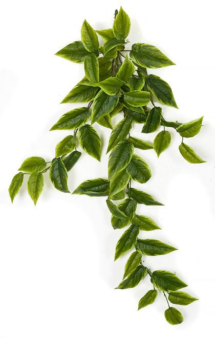 38 Inch Tutone Green Pothos Bush