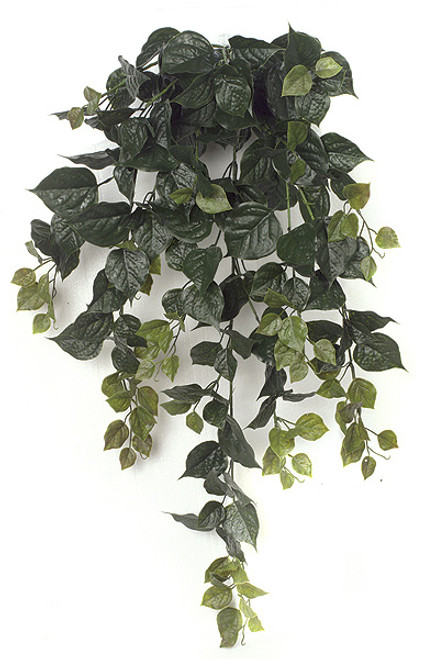 36 Inch Outdoor Green Bougainvillea Bush