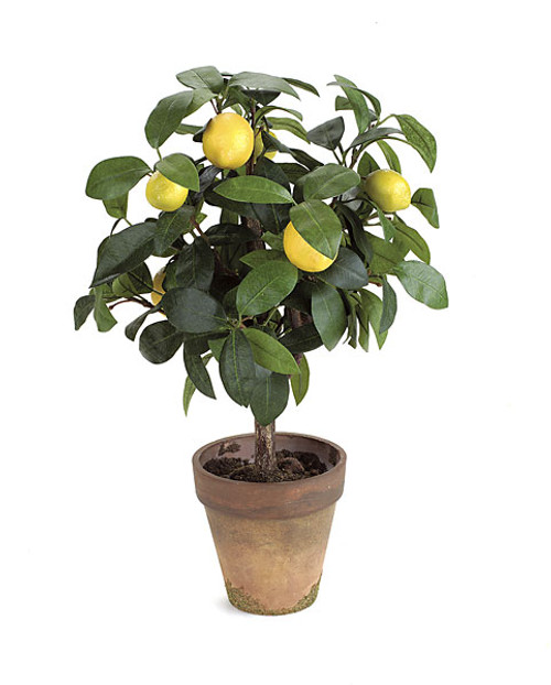 "P-0100 18"" Potted Lemon Topiary"