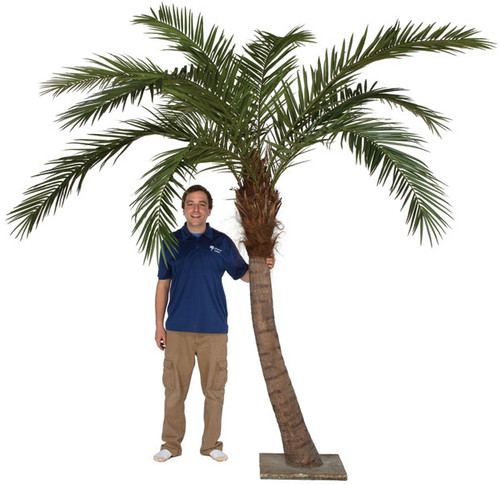 9.5 Foot Curved Phoenix Palm Tree with Steel Plated Base for Interior Use