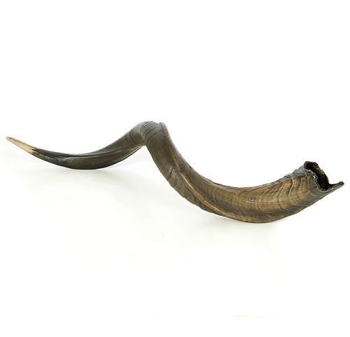 23 Inch x 5 Inch Brown Kudo Horn Decor