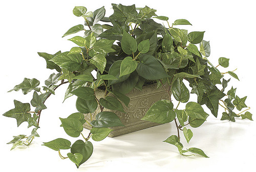 "P-3210 10"" Potted Mixed Sage Philo & Pothos Plant"