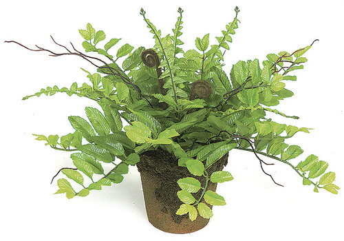 11 Inch Potted Fern Plant in Clay Pot with Moss