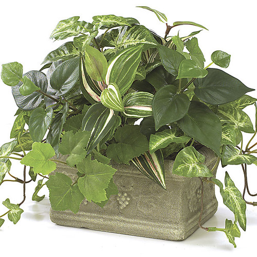 9 Inch Potted Syngonium, Wandering Jew, Pothos Ivy Plant