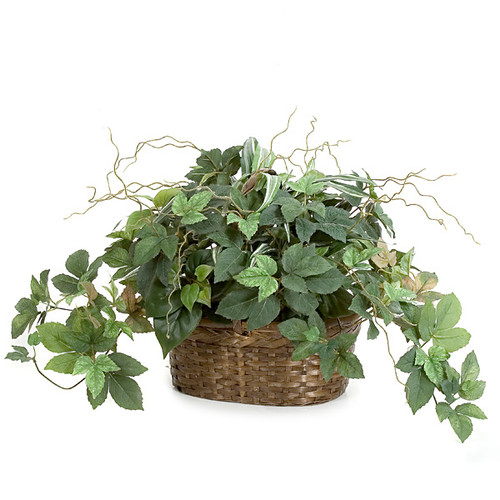 15 Inch Potted Maple Ivy and Philo Plant in Oval Basket