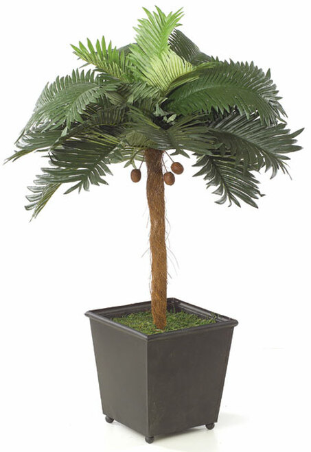 25 Inch Palm Tree with Mini Coconuts in Tin Planter