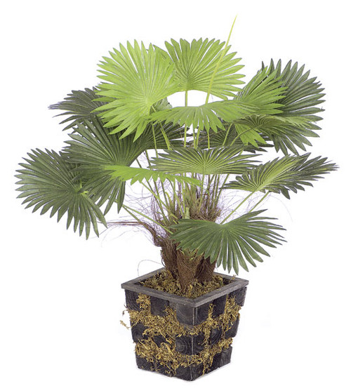 18 Inch Potted Mini Fan Palm