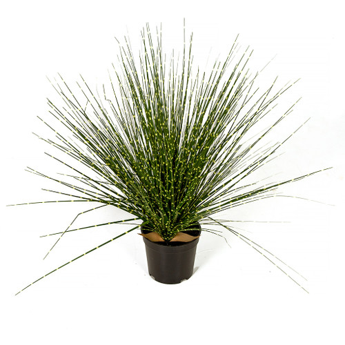 """A-184760 17"""" Potted Zebra Grass Green/Yellow"""