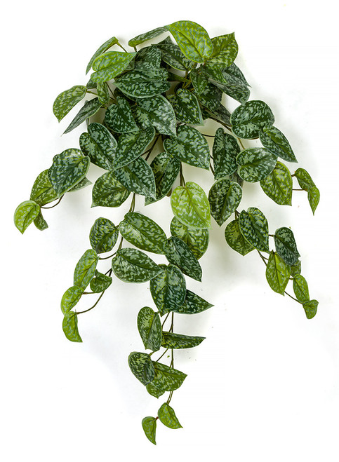 "26"" Scindapsus Leaf Bush"