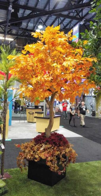 P-181360 - Orange/Red 10.5' Sugar Maple Tree