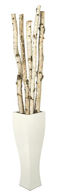 """6' to 8' Natural Wood Birch Poles2"""" to 3"""" WidthDecorative Pot Sold Separately"""