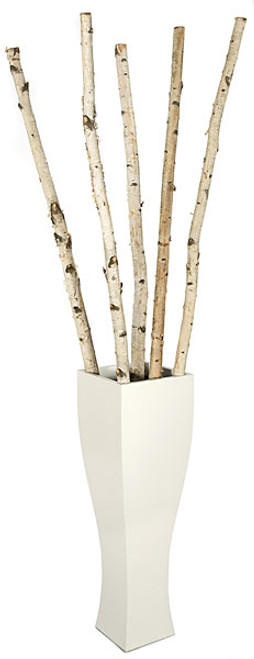 6 to 8 Feet -  Natural Birch Poles - 1 to 2 Inch Thick