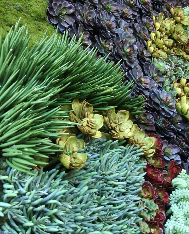 succulent-green-wall-closeup-crop.jpg