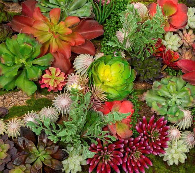 succulent-wall-insert-cactus-bettersize.jpg