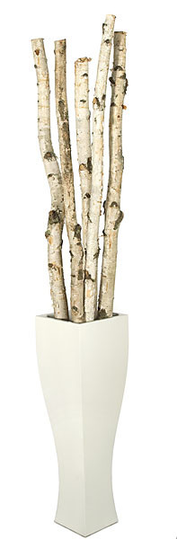 6 To 8 Natural Birch Poles 2 To 3 Quot Width Faux Birch