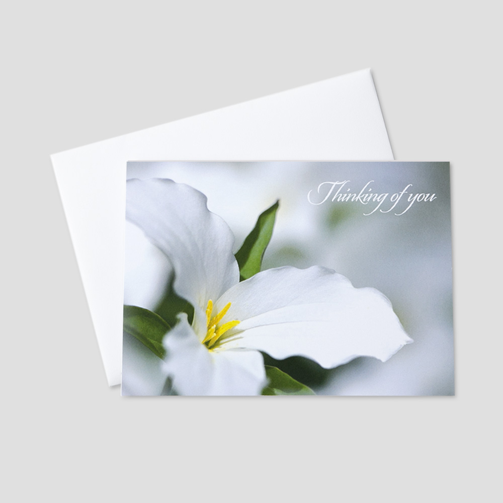 Personalized sympathy greeting card ceo cards business sympathy greeting card featuring a lily flower and a thinking of you message on a m4hsunfo