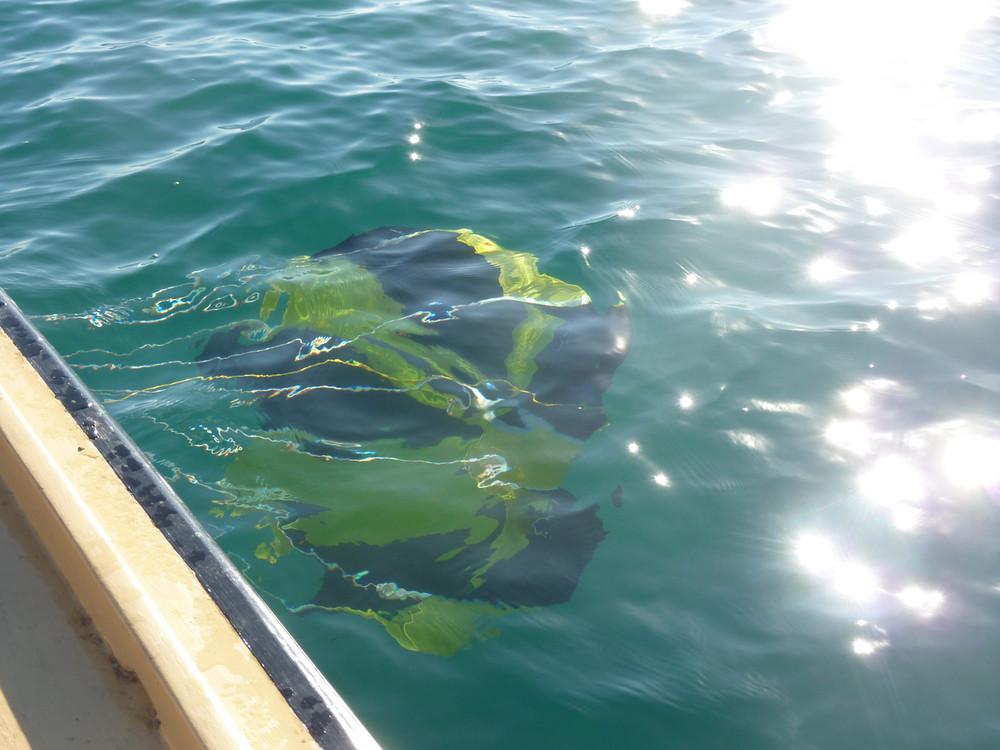 Para Anchor Fisherman Series
