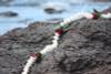 "Lei Pikake w/ Rose Bud White & Red 18"" - Hawaiian Silk Leis"