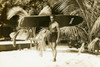 "Koa Surfboard Triple Stringer 72"" X 12"" Hawaiian Vintage | #koalb28"