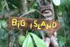 """""""BIG ISLAND"""" DRIFTWOOD SIGN 20"""" - POOL DECOR"""