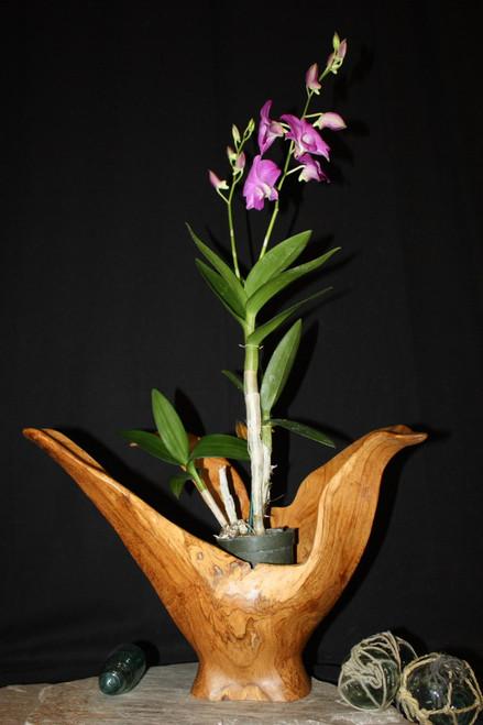 "Wooden Vase Rustic Bowl Sculpture 18"" X 19"" X 15""   #hwa171"