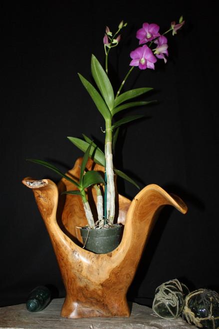 "Wooden Vase Rustic Bowl Sculpture 18"" X 14"" X 16"" | #hwa174"