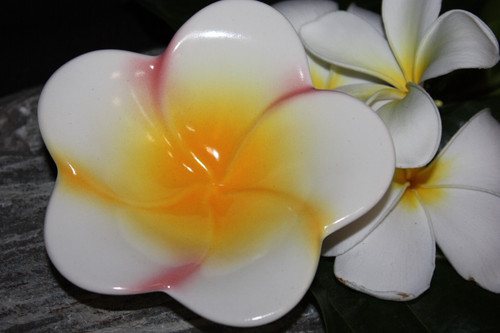 "Plumeria Multi-Colored Ceramic Bowl 5"" - Hawaii | #TCPBSM"