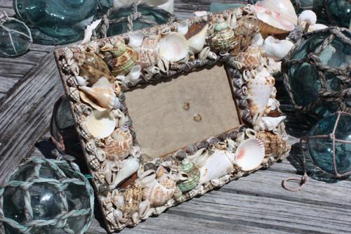 "Seashell Photo Frame Brown Edge Designer 2"" 3/4 X 5"" | #ana24035"