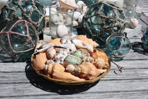 Seashell Baskets Assortment - Medium - Seashell Decor