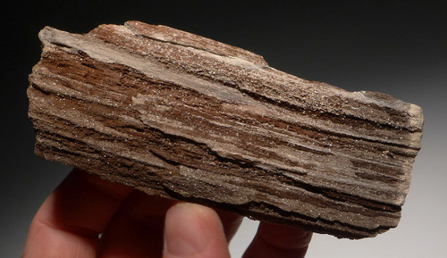 PL109 - RARE TRIASSIC PERMINERALIZED FOSSIL WOOD WITH SPARKLING DRUSY CRYSTALS FROM GERMANY