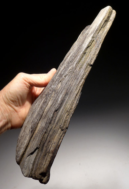 PL149 - LIFELIKE PETRIFIED FOSSIL LOG WITH PERMINERALIZED NATURAL DETAIL FROM THE MIOCENE