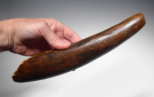 WOOLLY MAMMOTH TUSK TIP