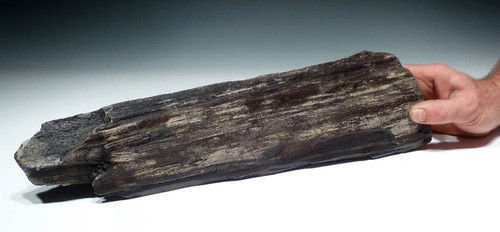 PL062 - MIOCENE PERIOD PETRIFIED WOOD LOG WITH INCREDIBLE DETAIL
