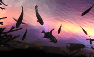 extinct fossil fish