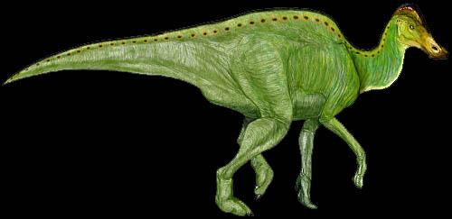 hypacrosaurusminoeo.jpg