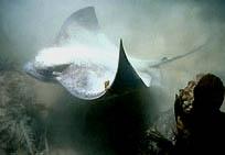 SHARK FOSSILS