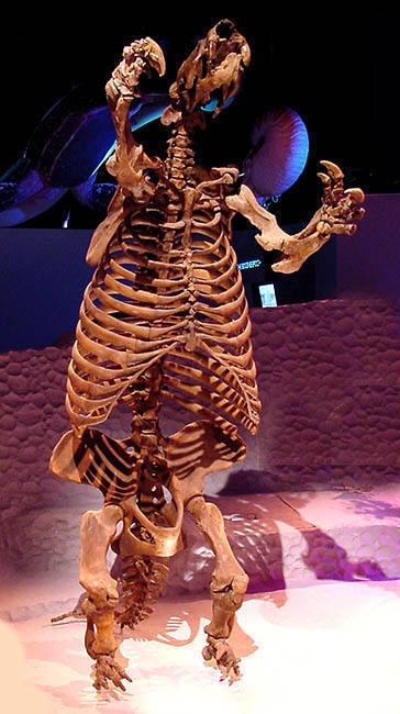 PREHISTORIC GIANT GROUND SLOTH FOSSIL