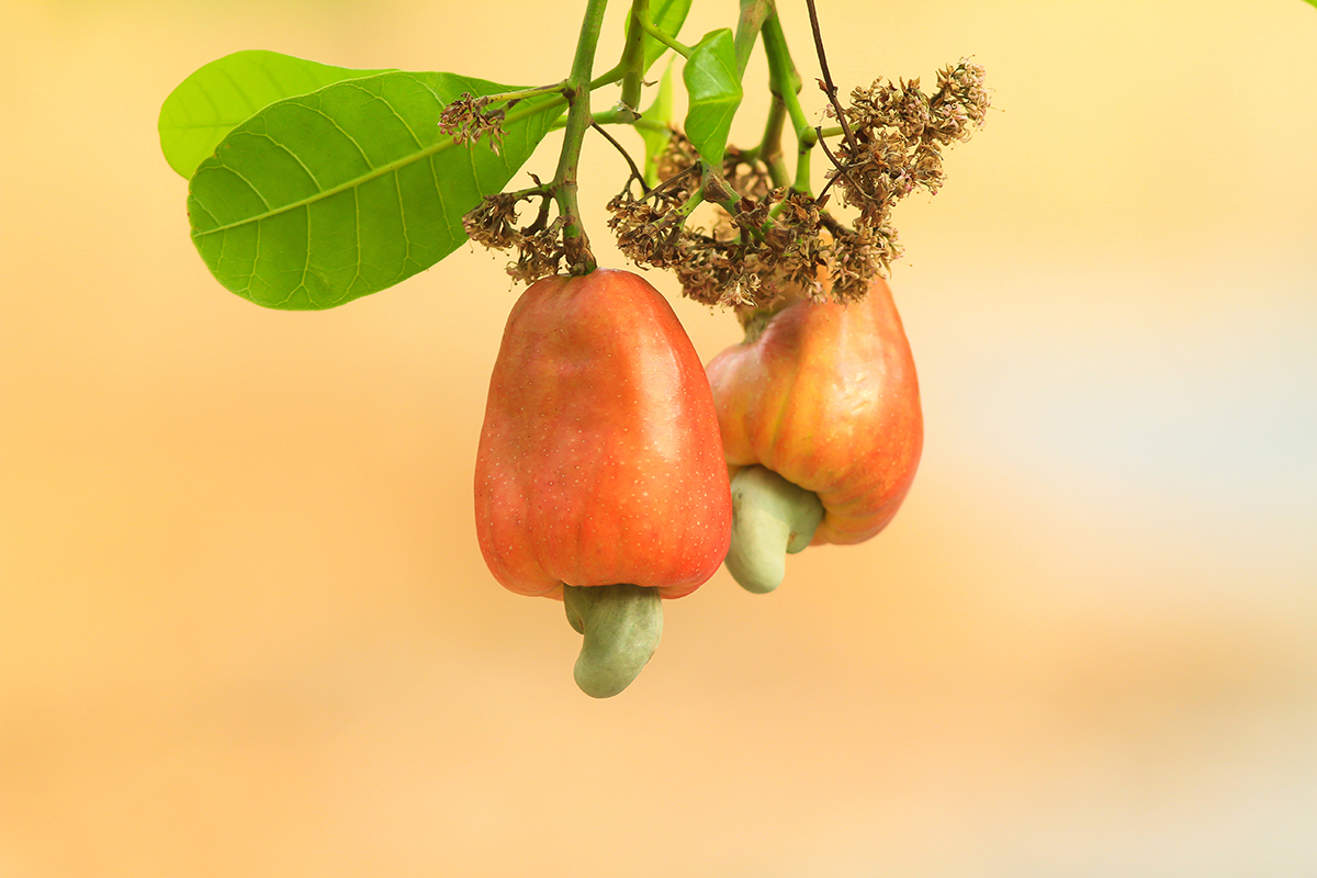 cashew-fruit.jpg