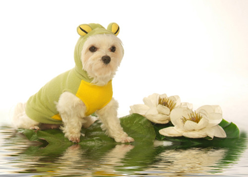 Hooded Frog Pet Costume