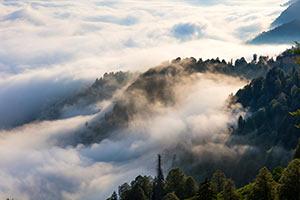 Tea Garden in Clouds