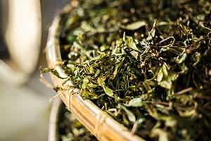 Oriental Beauty Tea Drying